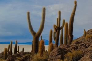 paysage de cactus-7105